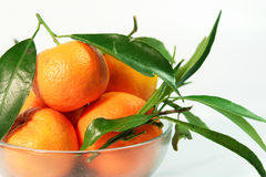 Mandarins. Fresh mandarins in a cup from my garden stock photography