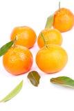 Mandarins. Fresh raw mandarins on white background in studio Stock Photography