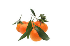 Mandarins. A group of tangerines with green leaves on a white background Stock Images