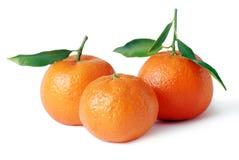 Mandarins Stock Photography