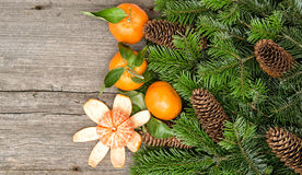 Mandarins and christmas tree branches Stock Images