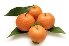 Mandarins with leafs stock image