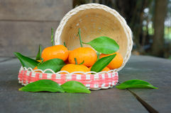 Mandarins orange fruit with green leaf on wooden floor, focused on the middle of the front orange. Close-up of mandarins orange fruit with green leaf on wooden Royalty Free Stock Photos