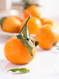 Mandarins with sheets Stock Images