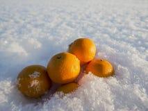 Mandarins in snow. Frosty sunny day Stock Photos