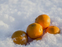 Mandarins in snow Stock Photos