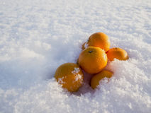 Mandarins in snow. Frosty winter sunny day Royalty Free Stock Images
