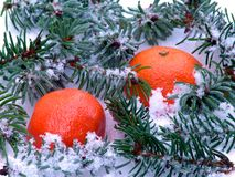 Mandarins in snow scene Royalty Free Stock Images