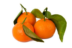 Mandarins on white Royalty Free Stock Photos