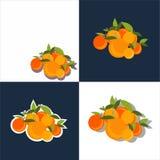 Mandarinuppsättning också vektor för coreldrawillustration Royaltyfria Bilder