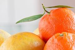 Mandaryn i cytryna obraz stock