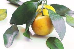 Mandaryn owoc odizolowywa biel zdjęcia royalty free