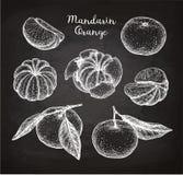 Mandaryn pomarańcze set ilustracja wektor
