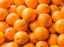 Mandaryn pomarańcze Obraz Royalty Free