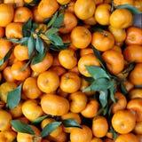 Mandaryn pomarańcze Obrazy Stock