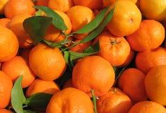mandarynek pomarańcze Fotografia Stock
