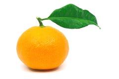 mandarynka owocowy Obraz Royalty Free