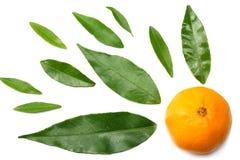 mandarynka z plasterkami i zielonym liściem odizolowywającymi na białego tła odgórnym widoku zdjęcia stock
