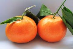 mandarynki wyśmienicie pomarańcze Zdjęcia Stock