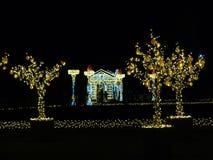 Mandarynu drzewa zimy Warszawskie dekoracje Obrazy Stock