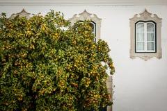 Mandarynu drzewo przeciw ścianie dom Obraz Royalty Free
