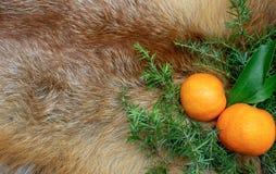 Mandaryny na tle Fox futerka świerczyna rozgałęziają się nowy rok zimy wakacje fotografia stock