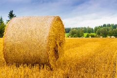 Mandatory Autumn Shot. The autumn is here. The fields are full of gold. Follow me on Twitter to see if your travel picture is on focus this week! | The Travel royalty free stock image