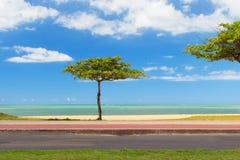 Mandelbaum auf blauem Wasser des Strandes und Himmelhintergrund, Vila Velha, Stockbild