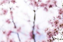 Mandelbaum in voller Blüte auf blauem Himmel im Frühjahr Schönes f Stockfotos