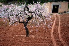 Mandelblomning- och stenskjulet fjädrar in, Catalonia, Spanien Arkivbild