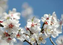 Frühjahrblüten Lizenzfreie Stockbilder