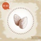 Mandelmuttrar kärnar ur gruppen skissar Tecknad illustration för vektor hand Organisk superfood förenlig detaljerad för lutning e Fotografering för Bildbyråer