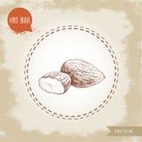 Mandelmuttrar kärnar ur gruppen skissar Tecknad illustration för vektor hand Organisk superfood förenlig detaljerad för lutning e Royaltyfria Foton