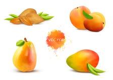 Mandeln, Aprikose, Birne, Mango, Pfirsich lizenzfreie abbildung