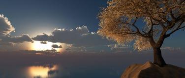 Mandelträd Arkivbild