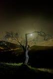 Mandelträd på natten Arkivbild