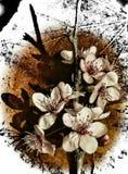 mandelträdet blommar i en filial Arkivfoton