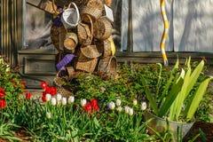 Manden en Tulpen Stock Foto