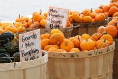 Manden groene pompoenen en oranje pompoenen Stock Fotografie