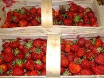 Manden van aardbeien Royalty-vrije Stock Foto's