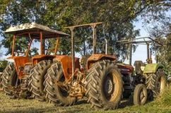 Manderin Landwirtschaft Lizenzfreies Stockbild