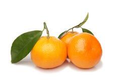 Manderine, mandarino, arancione fotografia stock libera da diritti