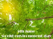 Mandi un sms alla Giornata mondiale dell'ambiente del 5 giugno, sotto la grande foglia p di verde dell'albero immagine stock libera da diritti