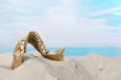 Mandibola del cranio trovata sulla spiaggia Fotografie Stock