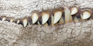 Mandibola del dinosauro Fotografia Stock