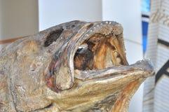 Mandibola spaventosa del pesce essiccato immagini stock