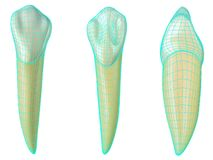 Mandibular canine tooth in the vestibular, palatal and lateral views with blue neon wireframe wrapping the tooth. Realistic 3d. Illustration of mandibular vector illustration