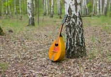 Mandolin som är borttappad i en björkskog Arkivbild