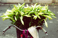 Mandona lilly blomma i Hanoi Arkivbild