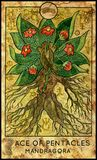 Mandragora. Ace of pentacles. Fantasy Creatures Tarot full deck. Minor arcana. Hand drawn graphic illustration, engraved colorful painting with occult symbols Stock Images